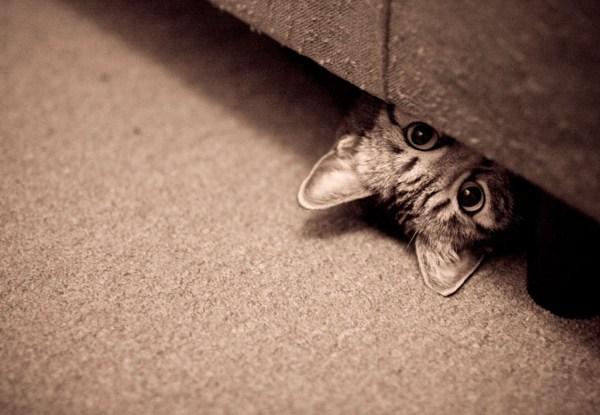 aproveitar-espaco-embaixo-da-cama