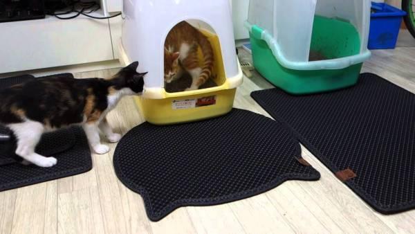 tapete-caixa-de-areia-gatos