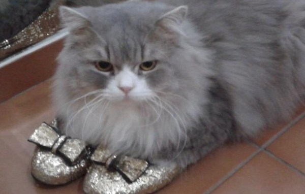 eddie-e-marie-historias-de-adocao-gatos-amor-ao-primeiro-ronron