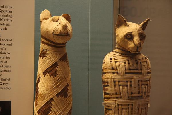 mumias-gatos-egito-bastet-british-museum