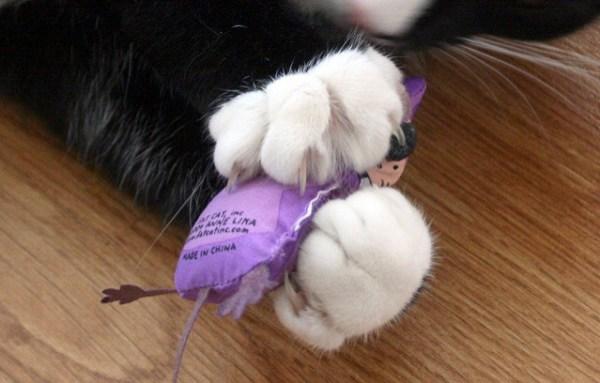 mitos-alimentacao-gatos-torturar-presa