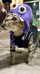 lispector-historias-de-adocao-gatos-2
