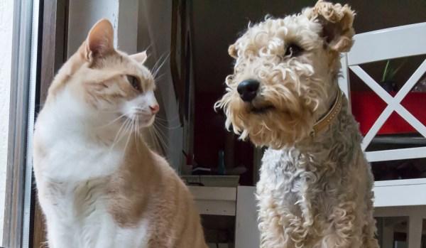 cachorro-gato-convivencia-pacifica