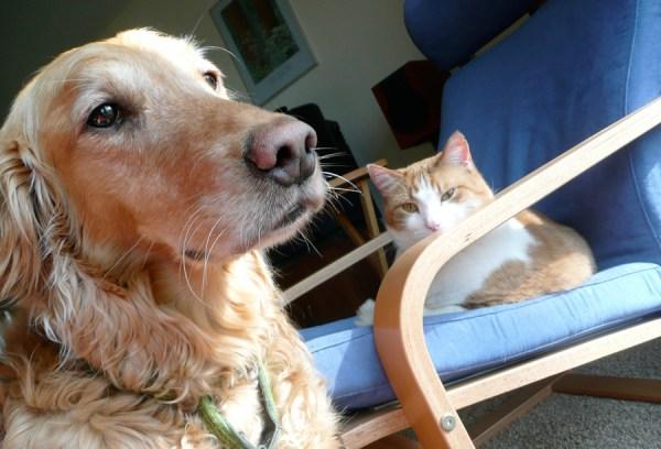 cachorro-gato-evitar-briga