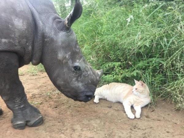 nandi mewie gato rinoceronte amizade 3