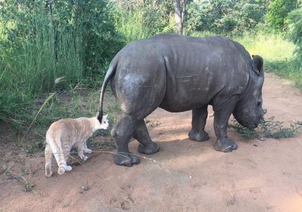 nandi mewie gato rinoceronte amizade 5