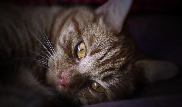 gato depressao doencas mentais