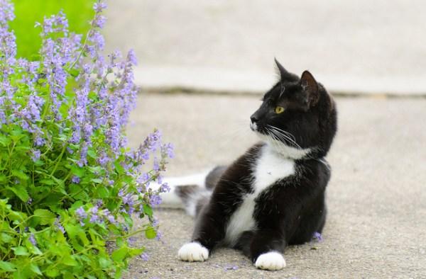 gato-jardinagem-plantas