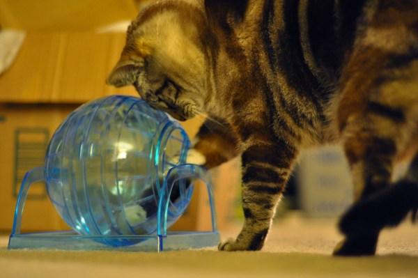 gato-puzzle-divertido