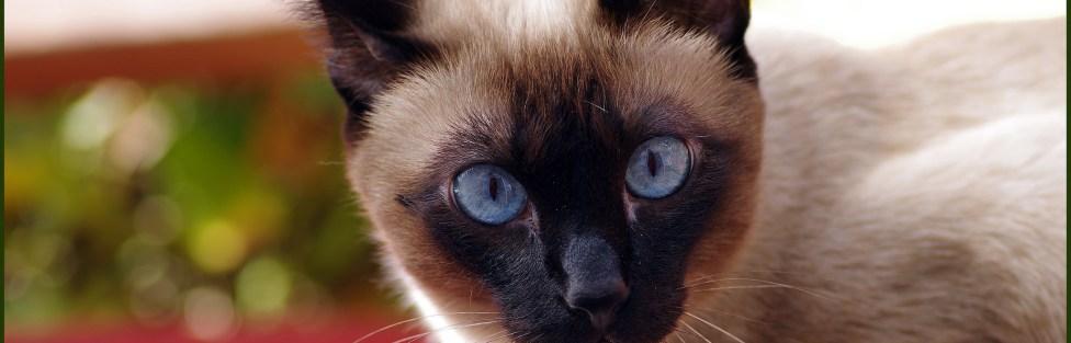 Um gato publicou dois artigos científicos na década de 80
