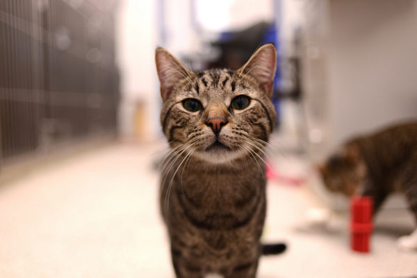 check up anual veterinario gatos exames