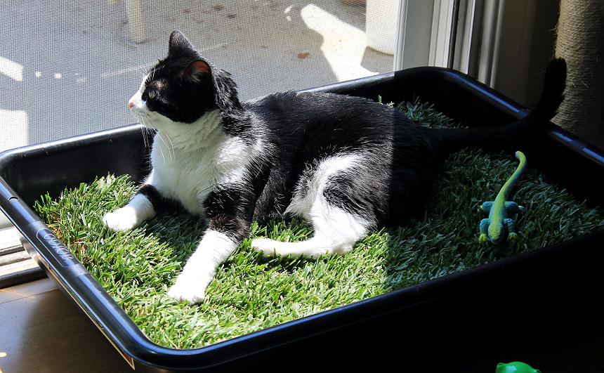 Como fazer um lounge de grama para gatos