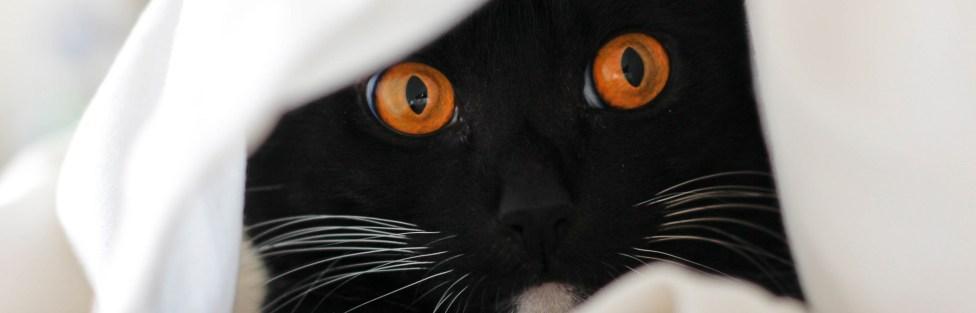 Como conquistar a confiança de um gato