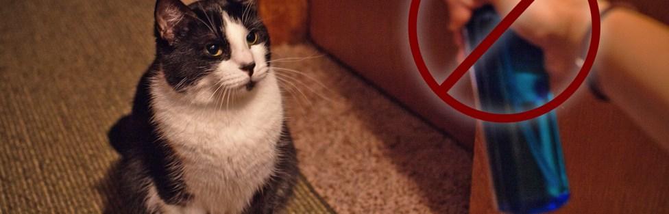 Porque você NUNCA deve usar spray de água em gatos