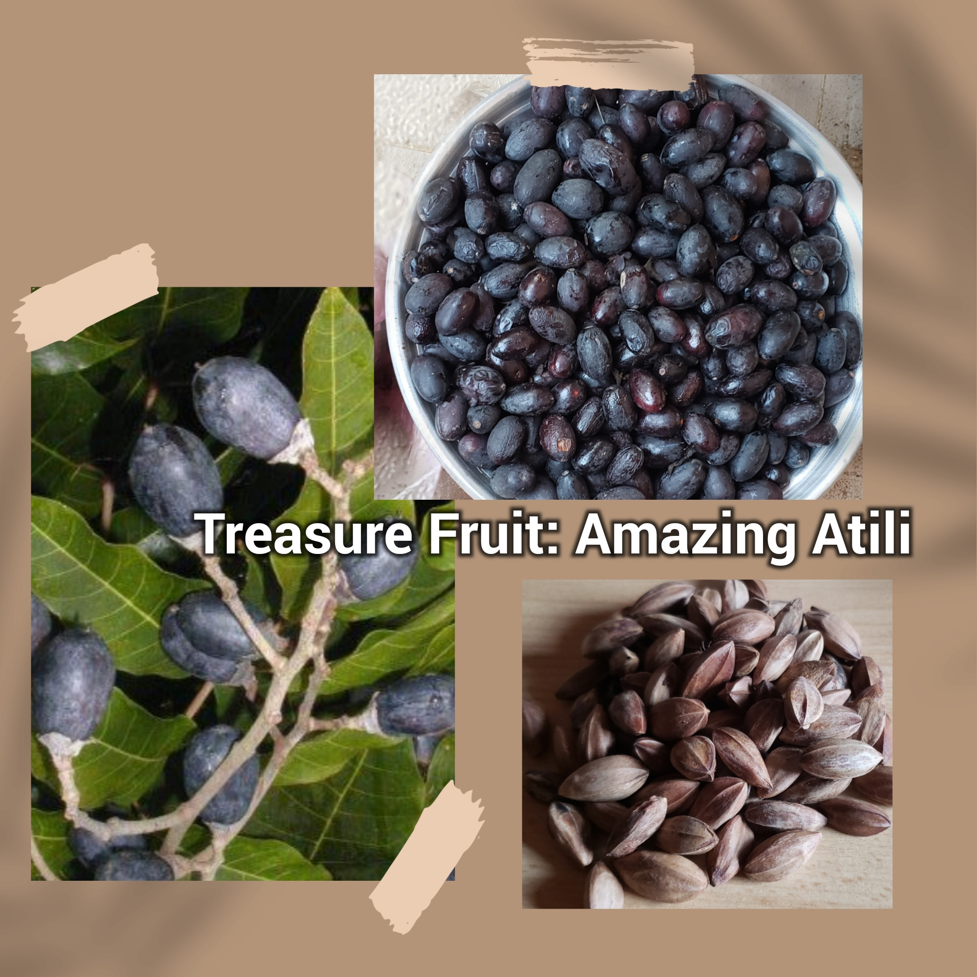 The Wonders of African Black Olives 'Atili' (3)