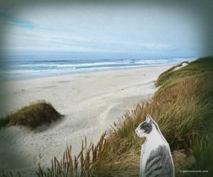GA_Cold beach