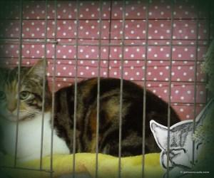 GA_Calico cage