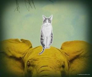 GA_elephant