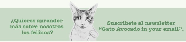 Newsletter CTA New Español. Gato Comments