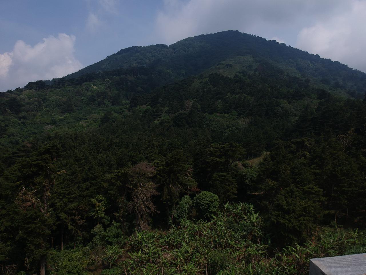Los habitantes dicen que después de la tala masiva de árboles en el cerro el Águila, ha habido un cambio de clima en el bosque y eso afecta a sus cultivos. Foto/Crack Rodríguez.