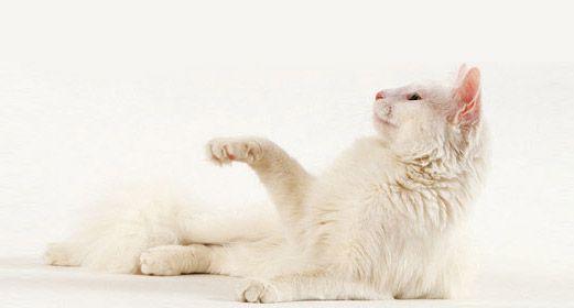 gato-relax1