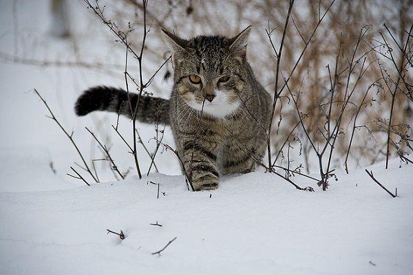 Cómo Ayudar a tu Gato a Combatir el Frío