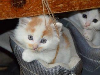 Ventajas de tener dos gatos