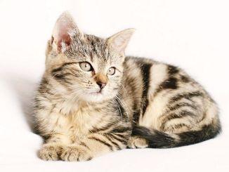 Cómo Encontrar a tu Gato si se ha Perdido