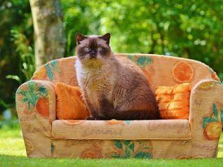 Seguros Veterinarios para Gatos: Todo Son Ventajas
