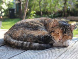 El Pasaporte Europeo de Mascotas para viajar con Gatos