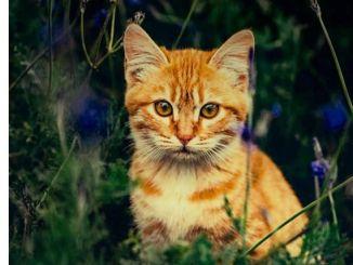 Libro Recomendado: El Gato que Curaba Corazones
