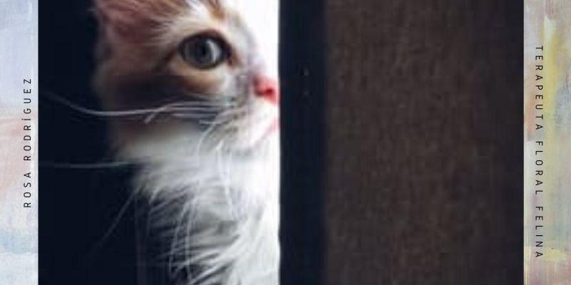 Miedo en gatos