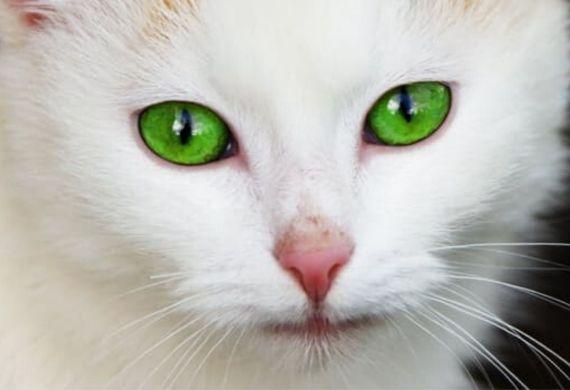 ¿Tiene tu gato insuficiencia renal?