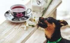 Ansiedad por la comida en perros