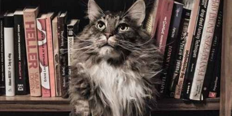 Gato con libros