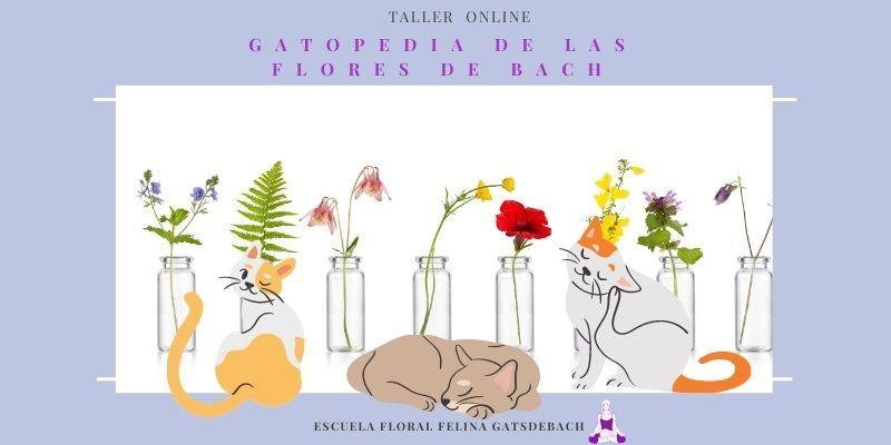 Taller Flores de Bach para Gatos