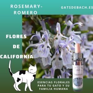 Rosemary Romero