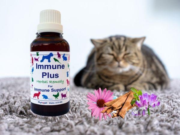 Immune Plus