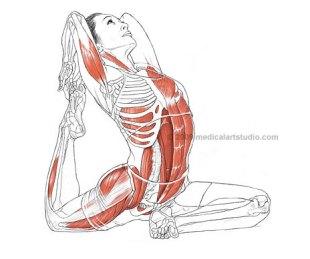anatomy 2