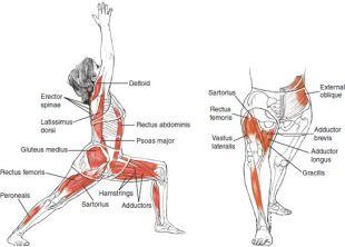 anatomy 3