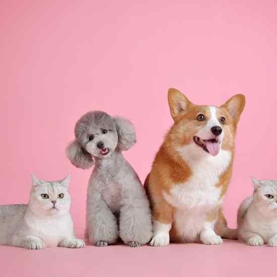 pets, cute, cat