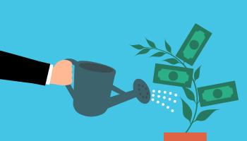 money, cash, tree