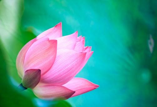 Relajación y meditación – tus dos mejores amigos