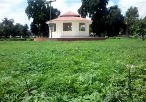 डॉ. राममनोहर लोहिया पार्क में खड़ी जंगली घास