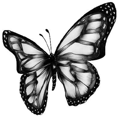 image de papillon noir et blanc gallery