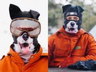 hunde-balaklava