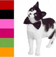 Kattesløyfe til pynt Image