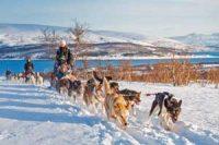 Hundekjøring og Nordlyscamp hos Tromsø Villmarkssenter - Opplevelsesgave Image