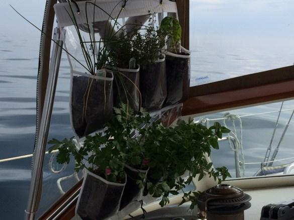 June 28 The garden tucked away in it's traveling nook