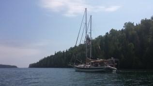 August 13 Gaviidae rafted to Steelen Time in Pantagruel Bay